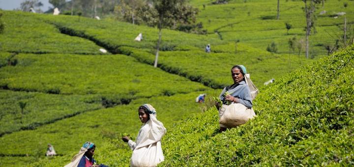 Мир чая! Лучшие места планеты для наслаждения чаем!