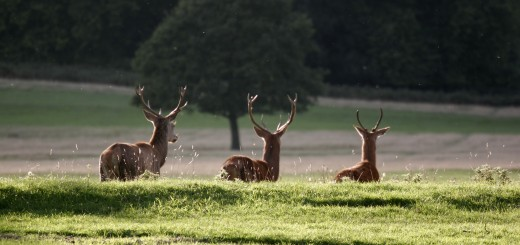 Richmond Park - London, England