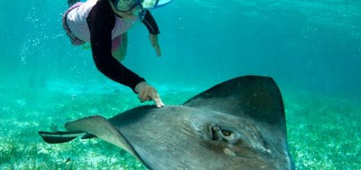 Снорклинг в Белизе, Ambergris Caye. Фото www.belizehotels.org