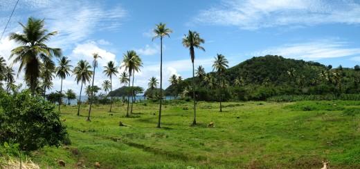 Доминика. Типичный пейзаж восточного побережья. Фото www.ru.wikipedia.org
