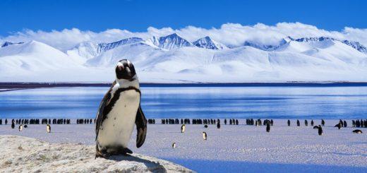 Айсберги Антарктиды могут быть спасены благодаря организованному туризму